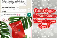 TESTI ROSE V 11