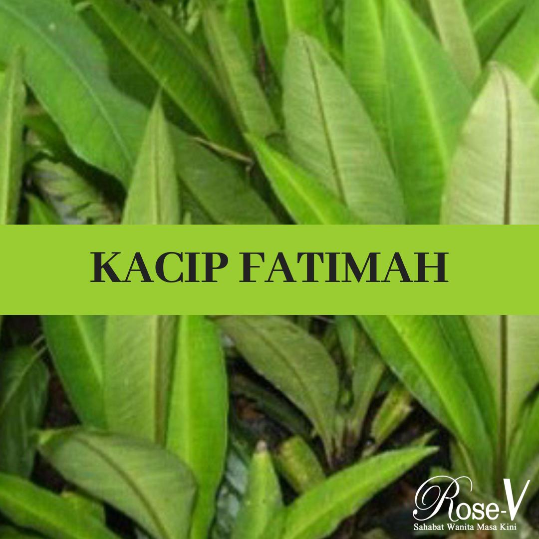 Tanaman Herbal Kacip Fatimah