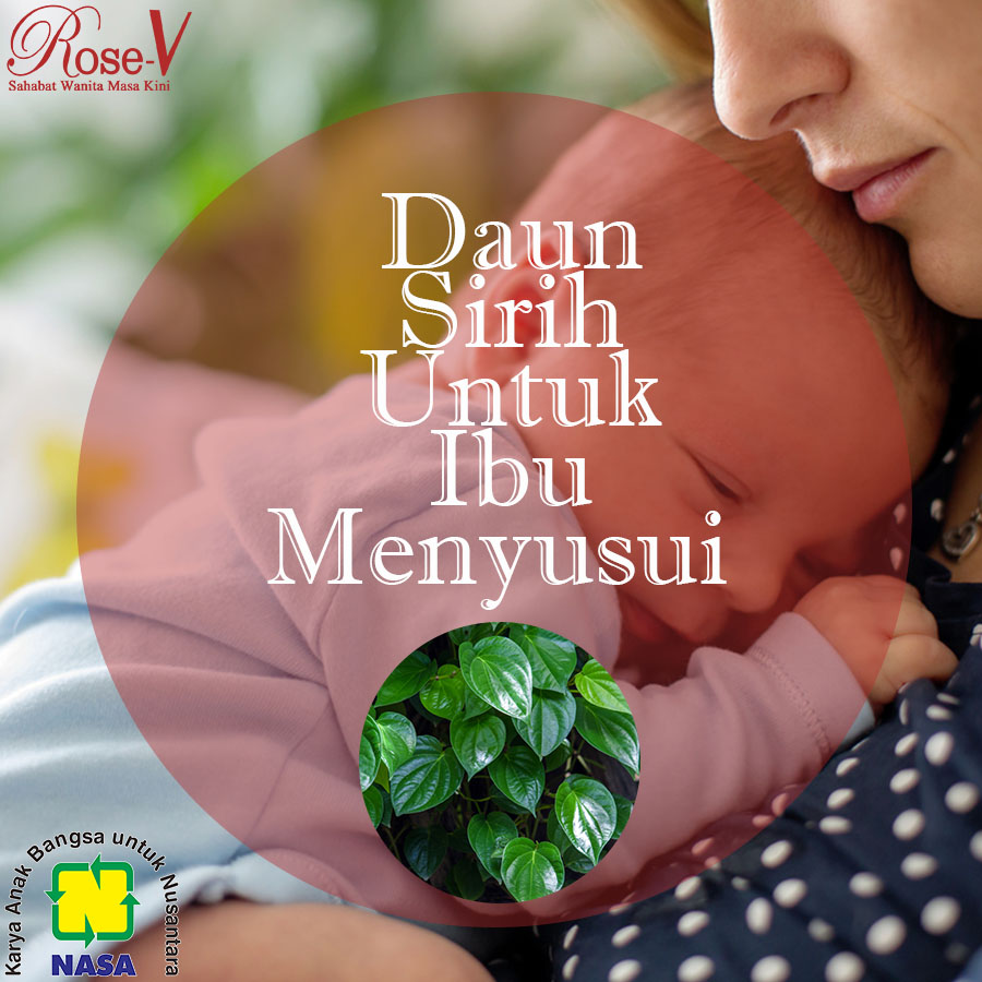 Daun Sirih Untuk Ibu Menyusui